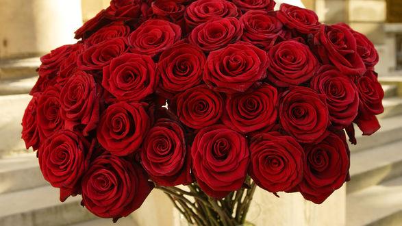 Обои Шикарный букет красных роз