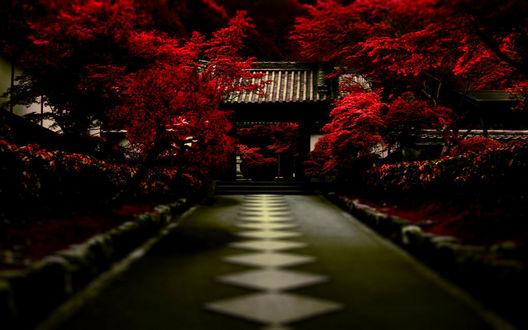 Обои Храм, дорога к нему и красные клены в районе Северная Хигасияма, Киото, Япония / Northern Higashiyama, Kyoto,  Japan с эффектом тилт шифт / tilt shift