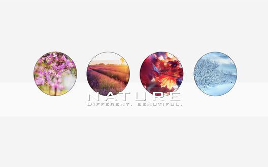 Обои Изображения времён года, запечатлённые в кружках с чёрными контурами (NATURE Different. Beautiful. / природа прекрасна разнообразием)
