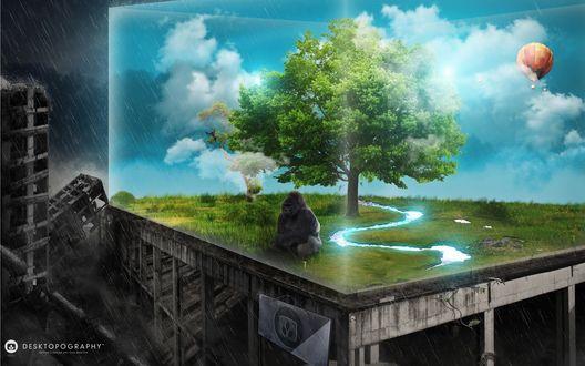 Обои Огромная одинокая горилла сидит в кубе, в котором еще сохранилась девственная природа, голубое небо, река и дуб, а вокруг этого куба ночь, ливень, разруха, и не единой выжившей души (Desktopography nature's desing on your desctor)
