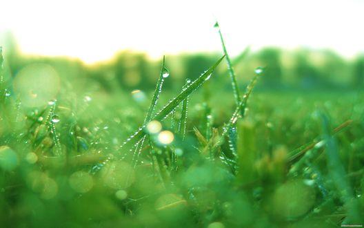 Обои Трава с каплями росы