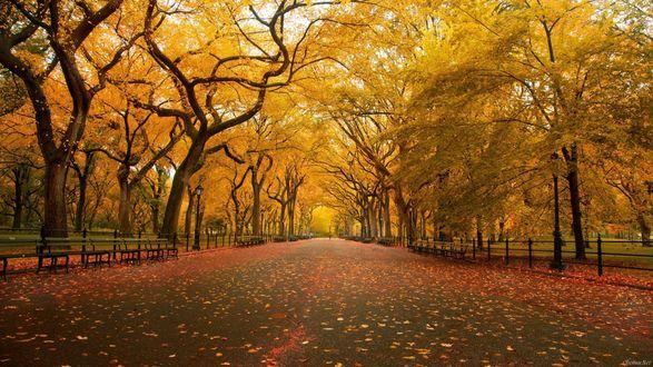 Обои Осенний парк, окутанный листвой
