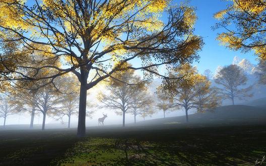 Обои Лось среди осенних деревьев в утреннем тумане