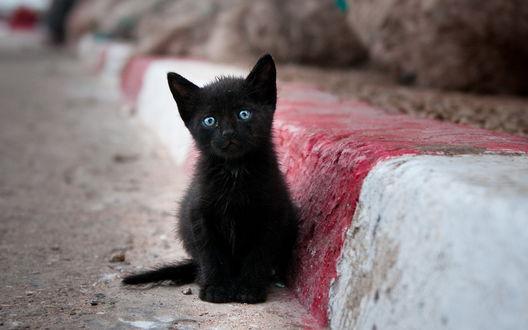 Обои Черный котёнок с голубыми глазами сидит у бровки