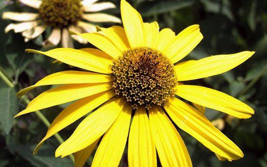 Обои Желтый цветок, сердцевина которого состоит из звездочек