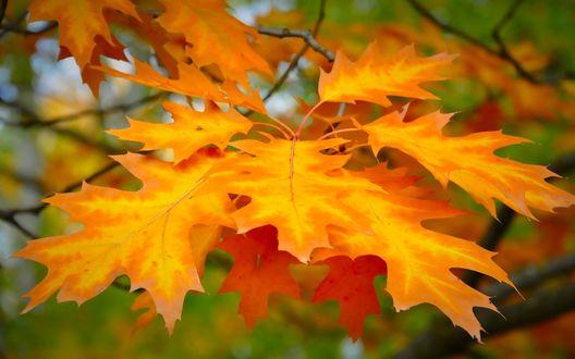Обои Желтые осенние листья на ветке
