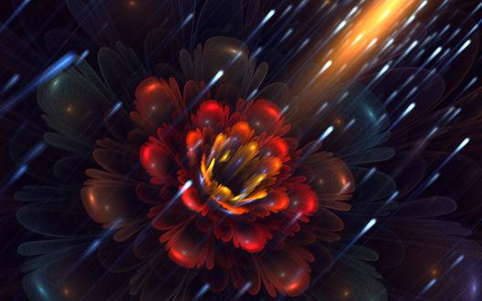Обои Красивые абстрактный цветок