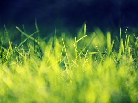 Обои Зеленная трава в макро съемке