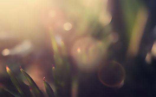 Обои Макро съёмка  в увеличенном плане листьев травы