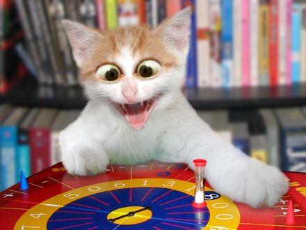 Обои Кот, сидящий за игровой рулеткой, вошел в азарт