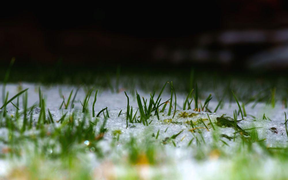 Картинка зеленая трава под снегом работает всё