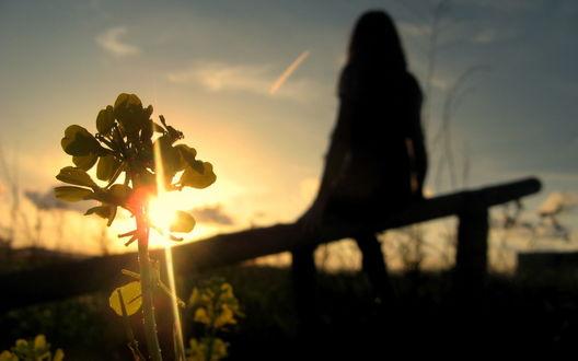 Обои Лучи солнца падают через цветок а девушка сидит на лавочке встречает рассвет
