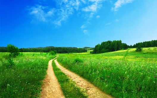 Обои Небольшая накатанная дорога через поле ведет к лесу