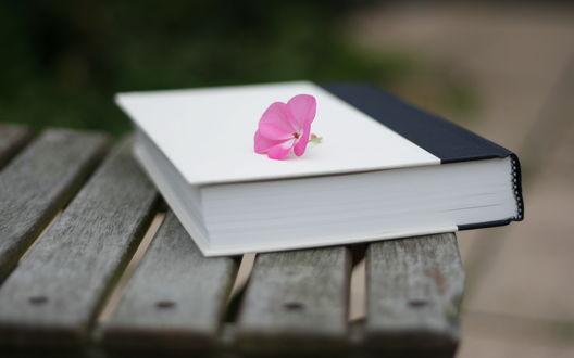 Обои Забытая книга на лавочке, на которой лежит розовый цветок