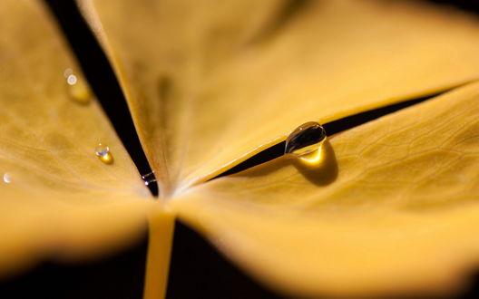 Обои Желтый листок в каплях воды