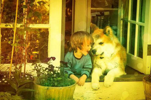 Обои Настоящая дружба - маленький мальчик и большой пес выглядывают с окна дома и как-будто общаются на только им понятном языке