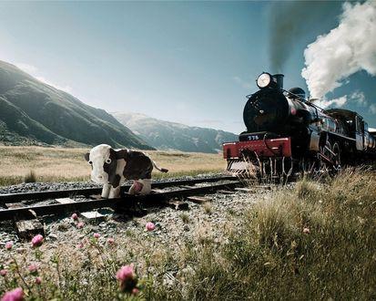 Обои Игрушечная корова стоит на настоящей железной дороге, преграждая путь идущему паровозу