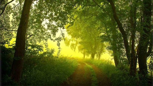 Обои Дорога сквозь могучий лес