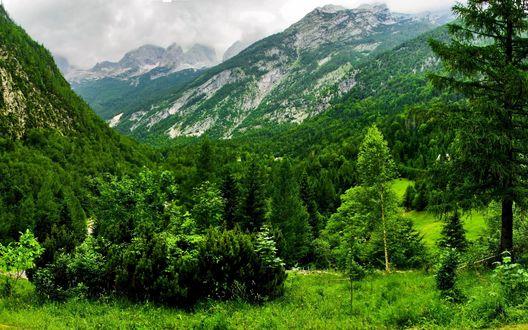 Обои Зеленые леса в горах Словении / Slovenia, Бовец / Bovec