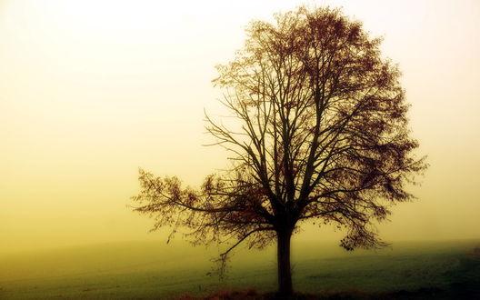 Обои Одинокое дерево в поле