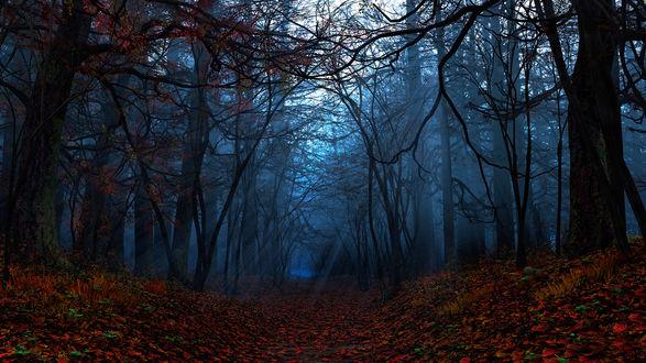 Обои Осенний темный и немного зловещий лес с причудливыми стволами деревьев