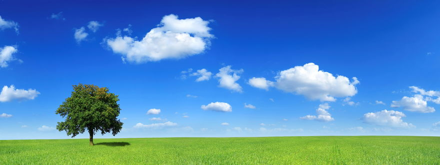 Обои Пейзаж: зеленый луг голубое небо одиноко стоящее дерево