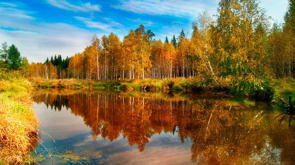 Обои Небольшой пруд в лесу, в зеркальной поверхности которого отражаются деревья с осенней листвой, голубое небо с перистыми облаками