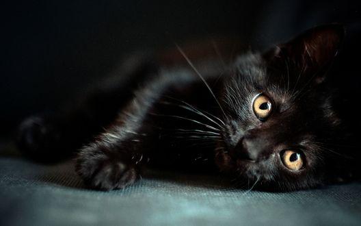 Обои Черный котенок лежит, уставившись на нас светлыми глазками