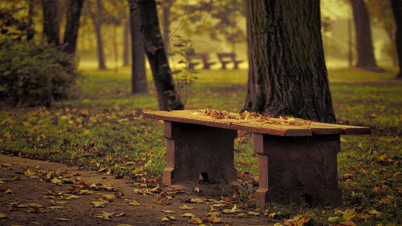 Обои Лавочка в осеннем парке, на которой лежат желтые листья
