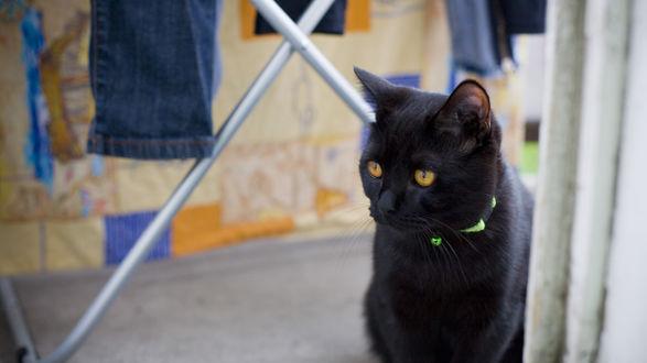 Обои Черная кошка с цветным ошейником сидит на подоконнике и смотрит в окно