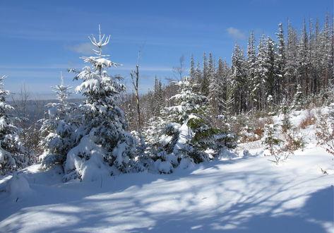 Обои Карпаты зимой