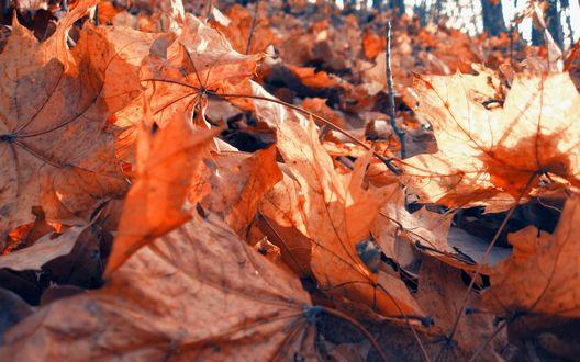 Обои Осенние листья, лежащие на земле