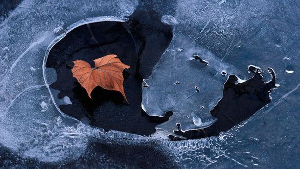 Обои Осенний листок одиноко лежит в луже, покрытой тонким льдом