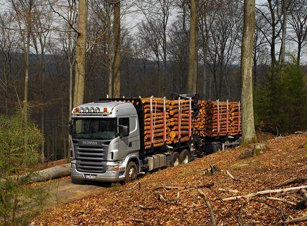Обои Грузовой автомобиль-лесовоз Скания, Швеция / Scania, Sweden с прицепом, нагруженным лесом, двигается по дороге, усыпанной осенними листьями, на фоне пасмурного неба