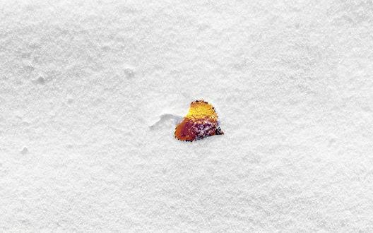 Обои Осенний лист на снегу