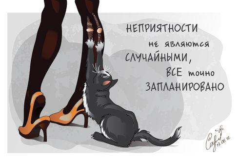 Обои Кошка точит когти о колготки (Неприятности не являются случайными, все точно запланировано)