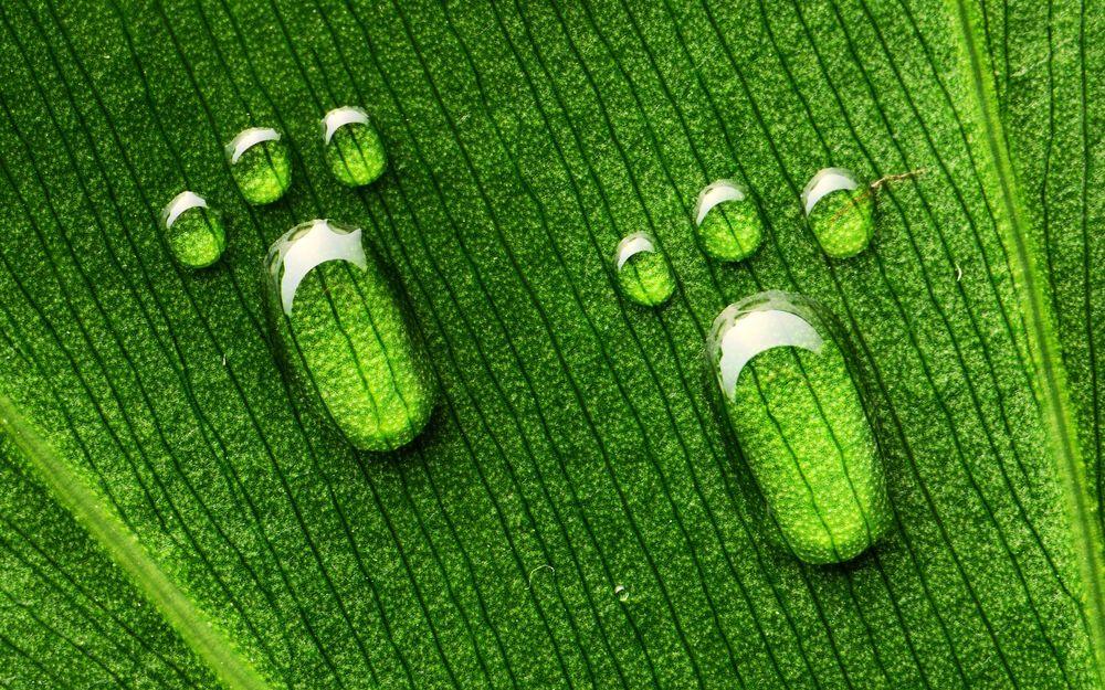 Обои для рабочего стола Капли воды на зеленом листе в форме отпечатка маленьких лапок