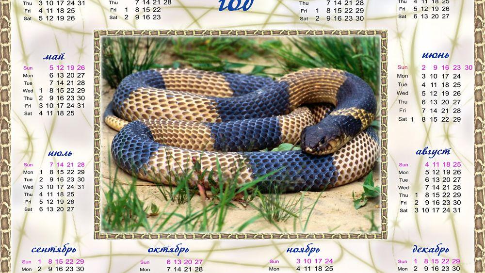 Обои для рабочего стола Календарь на новый  2013 год-Год Змеи