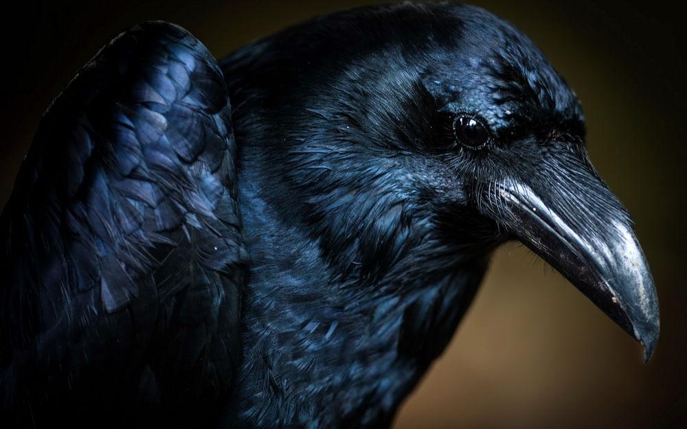 скачать торрент черный ворон - фото 9