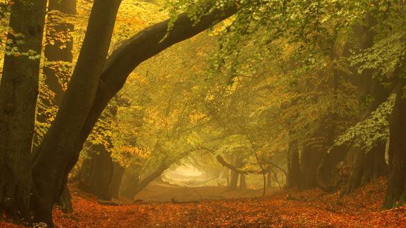 Обои Осенний лес