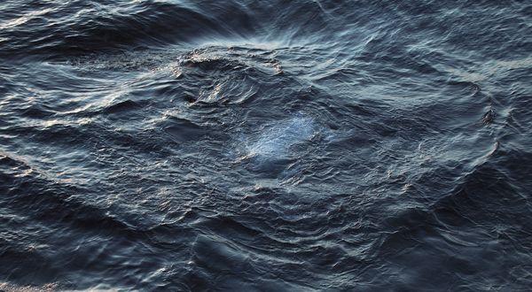 Обои Белая рыба под темными волнами в воде
