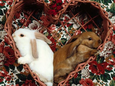Обои Два кролика лежат в плетеной корзинке в виде сердечка, расположенной на клеенке с красивыми, рисованными цветами