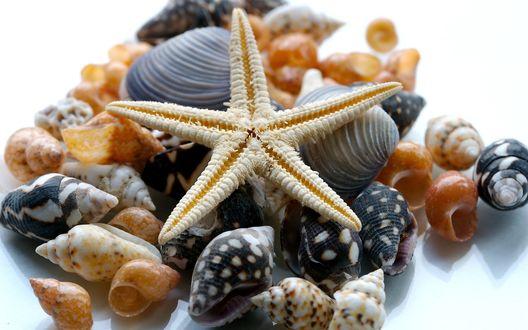 Обои Морская звезда и ракушки