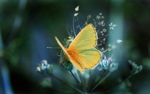 Обои Бабочка сидит на растении