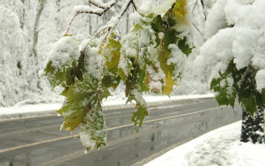 Обои Неожиданно выпавший мокрый снег, лежит на еще зеленых листьях деревьев, стоящих вдоль дороги с мокрым асфальтом