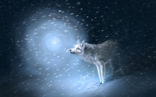 Обои Белый волк идёт на свет сквозь снежную вьюгу