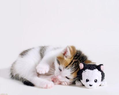 Обои Маленький пушистый котенок прилег рядом с мягкой игрушкой, и играет с собственным хвостиком