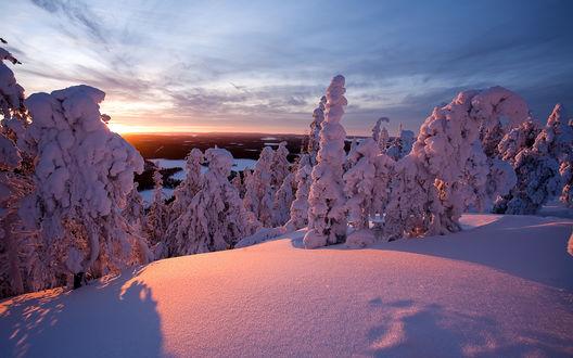 Обои Покрытые снегом деревья, освещенные солнечными лучами