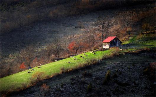 Обои Небольшой домик с красной черепичной крышей, стоящий на пастбище с зеленой травой и пасущимися на нем домашними животными