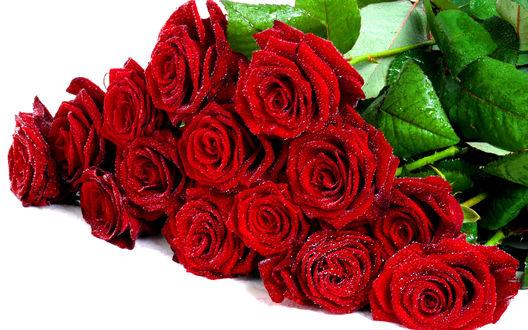 Обои Шикарный букет роз, покрытых каплями воды